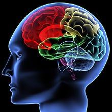 brain-thinking2.jpg