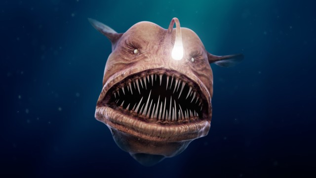 thomas-veyrat-anglerfish-view02-front