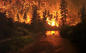 300px-Deerfire_high_res_edit