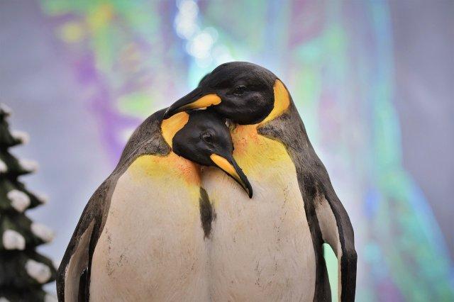 penguin-4675025_1920